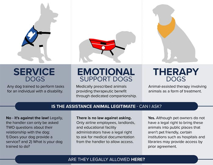 Differences Psychiatric Service Dog PSD Emotional Support Animal ESA Therapy Dog Register Today to Fly with Airline DOT